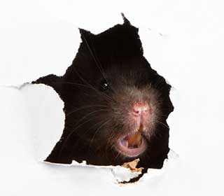 Protect Your Home From Rodents | Attic Cleaning Newport Beach, CA